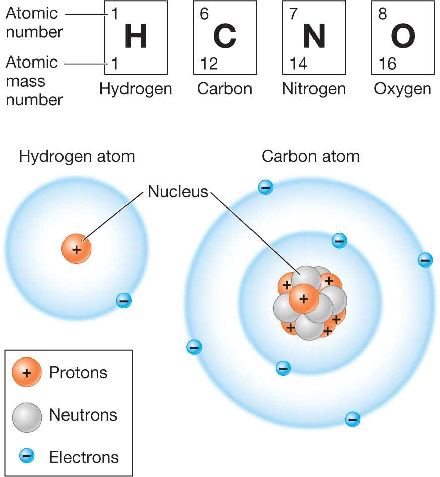 Biology now diagrams showing the periodic table entries for hydrogen carbon nitrogen and oxygen urtaz Choice Image