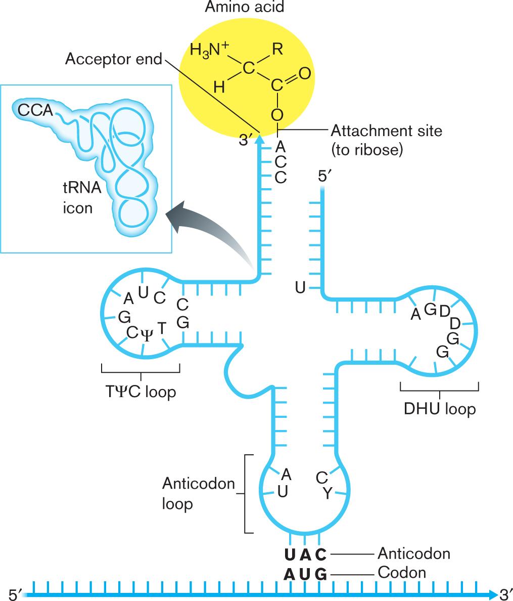 Microbiology 4E