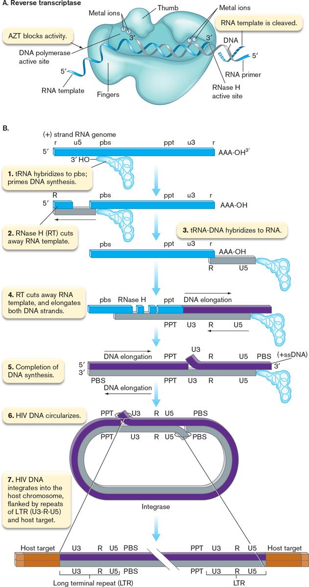 hiv retrovirus