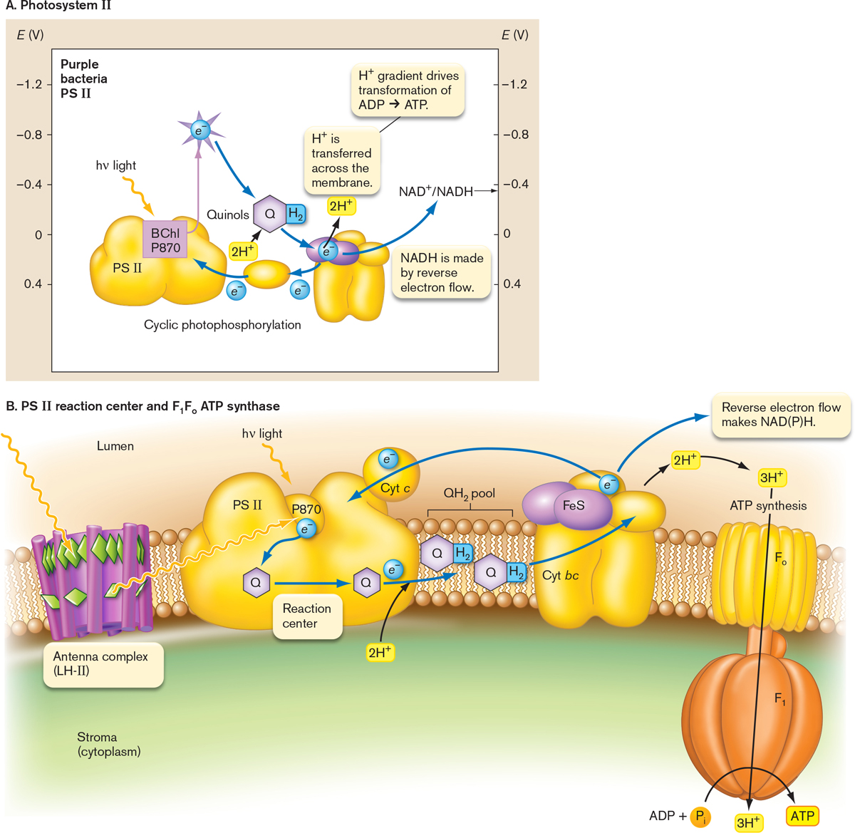 ebook Plant Microbe