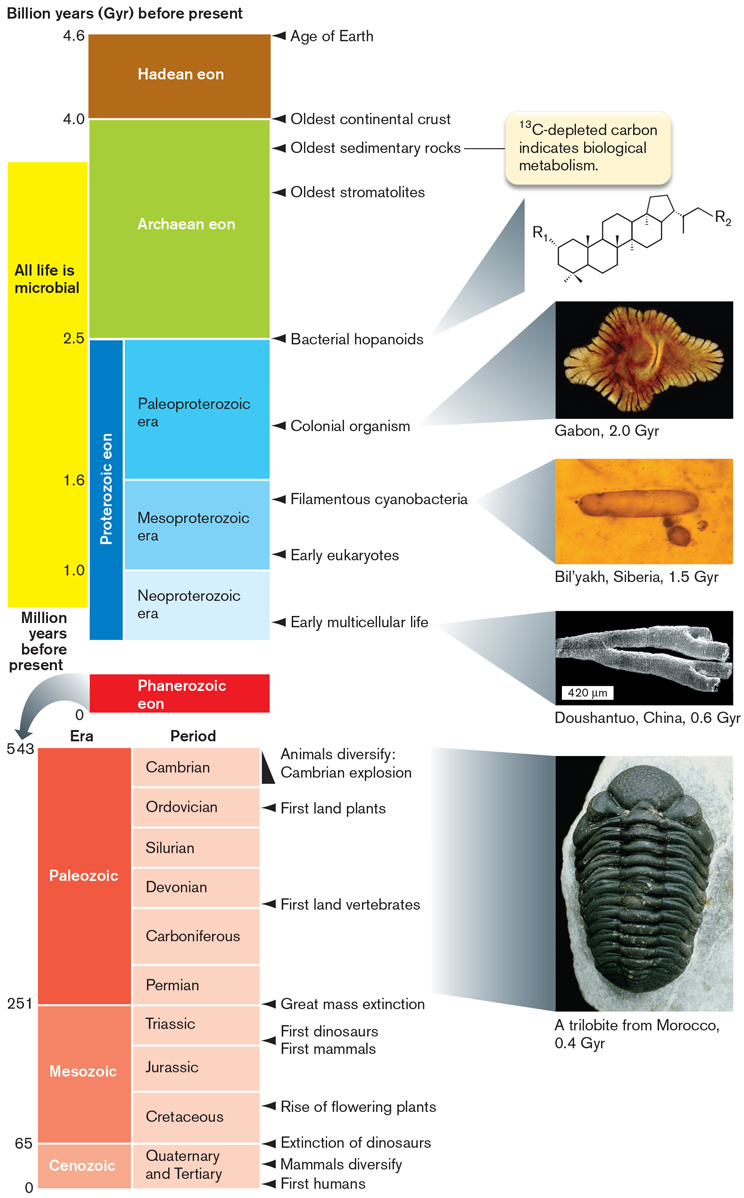 Microbiology 4e figure 175 geological evidence for early life the geological record shows biosignatures of microbial life early in earths history 3 gyr before the fandeluxe Gallery