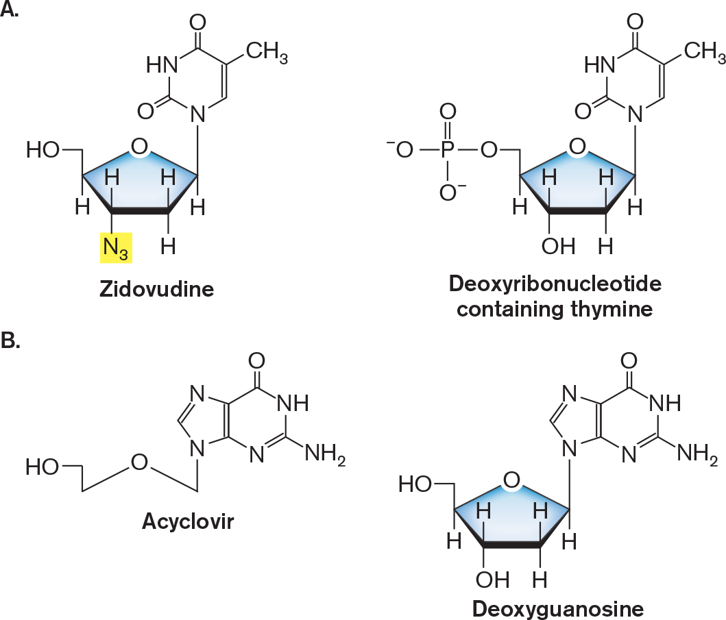 Microbiology 4e neuraminidase inhibitor any of a class of anti influenza drugs that target neuraminidase on the viral envelope and decrease the number of virus particles fandeluxe Choice Image